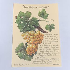 自社輸入 ポストカード ブドウ品種|charpente