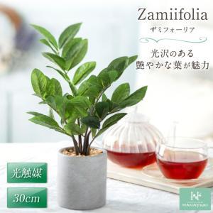 人工観葉植物 フェイクグリーン 光触媒加工 卓上 ザミフォーリア ポット 高さ25cm フェイクグリーン ミニ 人工観葉植物 HANAYUKI|chibamart