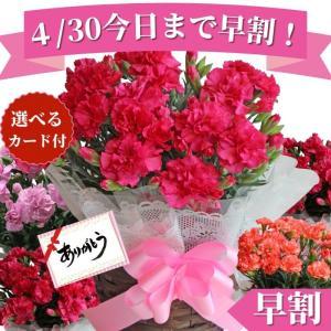 母の日 ギフト カーネーション プレゼント 花 鉢植え 5号鉢 送料無料 選べるメッセージカード付き