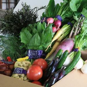 ブランド野菜詰合せ|chiki-gift