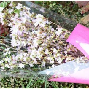 おもてなしギフト 啓翁桜  山形のフラワーショップ花樹有が贈る 山形特産 啓翁桜の花束と山形の地酒セット「吟醸 啓翁桜」のギフトセット|chiki-gift|06