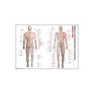 解剖ポスター 全身骨格と骨指標|choiceippinkanselect