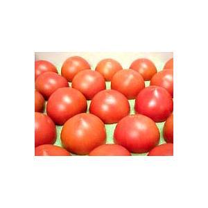 高糖度フルーツトマト 約1キロ 高知県夜須町産 ご贈答用 化粧箱入 高糖度 糖度8度以上 中玉トマト 高級 ギフト プレゼント 産地直送 甘い 国産 ジュース ゼリー|chokuhan