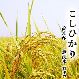 こしひかり 5キロ 無洗米 高知県産 令和2年産 BG米 精米 お米 こめ 白米 ご飯 ごはん コシヒカリ ギフト プレゼント 産地直送 銀シャリ chokuhan
