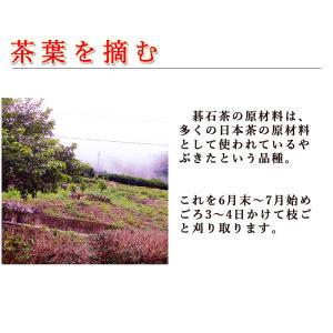 碁石茶 ごいし茶 土佐の乳酸菌発酵茶 まとめ買いお得用セット(約50グラム×2袋) 高知県大豊町産 chokuhan 05