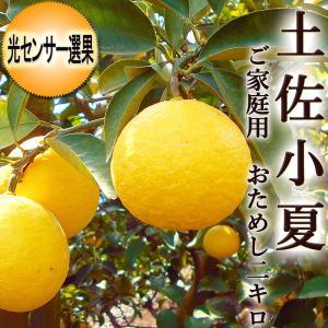 光センサー選果  「土佐小夏(ニューサマーオレンジ・日向夏)」 おためし約2キロ サイズおまかせ|chokuhan
