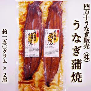 あすつく 送料無料 【四万十うなぎ(株)】うなぎ蒲焼 2尾セット 特大!約150gサイズ|chokuhan