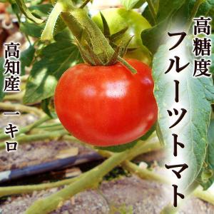 高糖度「フルーツトマト」 高知県夜須町産 約1キロ おためし...