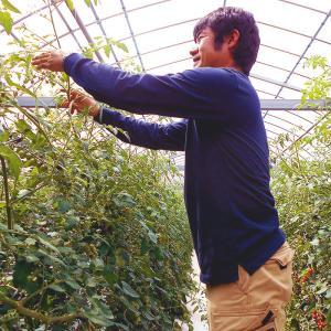 杉本さんの「有機栽培トマト」 約1キロ 無農薬 高知県大豊町産 ご家庭用 お届けにお時間をいただく場合がございます|chokuhan|03