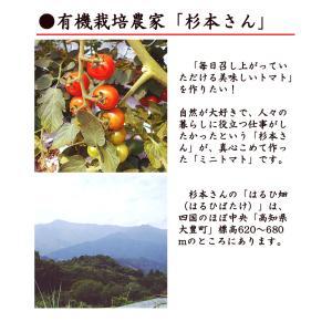 杉本さんの「有機栽培トマト」 約1キロ 無農薬 高知県大豊町産 ご家庭用 お届けにお時間をいただく場合がございます|chokuhan|05