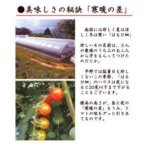 杉本さんの「有機栽培トマト」 約1キロ 無農薬 高知県大豊町産 ご家庭用 お届けにお時間をいただく場合がございます|chokuhan|06