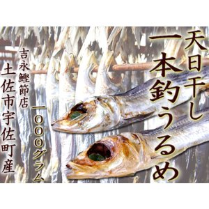 一本釣りうるめ 天日干し 約1キロ(45〜54尾ほど)特上品 吉永鰹節店の完全手づくり 土佐市宇佐町産|chokuhan