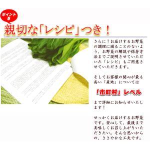 とれたて野菜 8種類セット 高知産 レシピ・追加機能 送料無料 [Qv10] 詰め合わせ クール便 新鮮 葉物 根菜 香味 定番野菜 翌日発送も可 土佐 四国|chokuhan|14