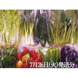 とれたて野菜 8種類セット 高知産 レシピ・追加機能 送料無料 [Qv10] 詰め合わせ クール便 新鮮 葉物 根菜 香味 定番野菜 翌日発送も可 土佐 四国|chokuhan|05