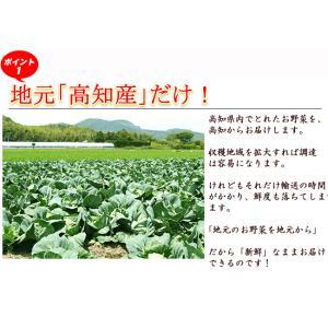 とれたて野菜 8種類セット 高知産 レシピ・追加機能 送料無料 [Qv10] 詰め合わせ クール便 新鮮 葉物 根菜 香味 定番野菜 翌日発送も可 土佐 四国|chokuhan|10