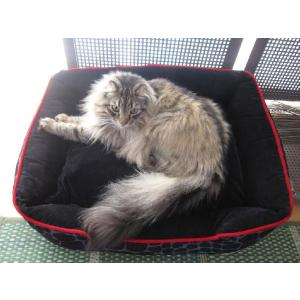 洗える猫のベッド P.L.A.Y. ラウンジベッド サバンナ チョコレート|ciera|06