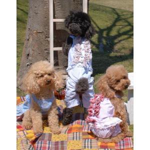 犬の服 春 夏 新作 ストライプフリルロンパース ブルー beache ビーチェ つなぎ カフェマット付き 洋服 ドッグウェア|ciera|04