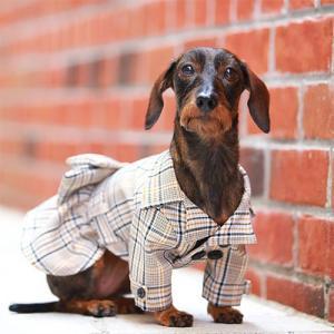 犬の服 秋 冬 GODPIVA チェックトレンチコート レッド ゴッドピヴァ 洋服 ドッグウェア|ciera|04