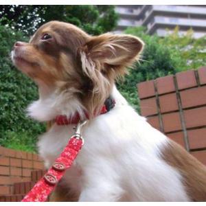 犬用リード フラワーリード 犬と生活 コットン 小型犬|ciera|03