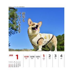 コーギー 犬川柳 週めくり カレンダー 2020 年 壁掛け & 卓上 スケジュール いぬ APJ 150×180mm 動物 写真 書き込み|cinemacollection|02