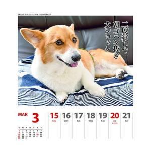 コーギー 犬川柳 週めくり カレンダー 2020 年 壁掛け & 卓上 スケジュール いぬ APJ 150×180mm 動物 写真 書き込み|cinemacollection|04