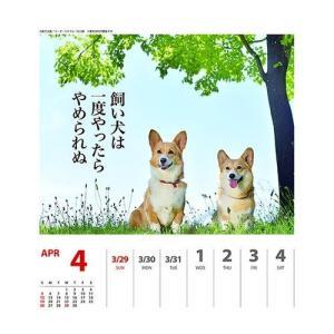 コーギー 犬川柳 週めくり カレンダー 2020 年 壁掛け & 卓上 スケジュール いぬ APJ 150×180mm 動物 写真 書き込み|cinemacollection|05