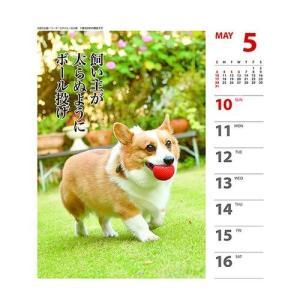 コーギー 犬川柳 週めくり カレンダー 2020 年 壁掛け & 卓上 スケジュール いぬ APJ 150×180mm 動物 写真 書き込み|cinemacollection|06