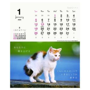 カレンダー2020年 低血圧なネコ 卓上 ポストカード仕様 ねこ APJ 150×190mm 動物 写真|cinemacollection|02