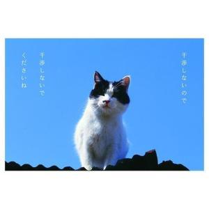 カレンダー2020年 低血圧なネコ 卓上 ポストカード仕様 ねこ APJ 150×190mm 動物 写真|cinemacollection|04