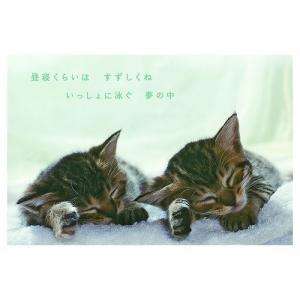 カレンダー2020年 低血圧なネコ 卓上 ポストカード仕様 ねこ APJ 150×190mm 動物 写真|cinemacollection|05