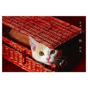 カレンダー2020年 低血圧なネコ 卓上 ポストカード仕様 ねこ APJ 150×190mm 動物 写真|cinemacollection|06