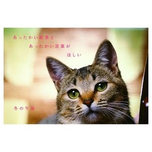 カレンダー2020年 低血圧なネコ 卓上 ポストカード仕様 ねこ APJ 150×190mm 動物 写真|cinemacollection|07