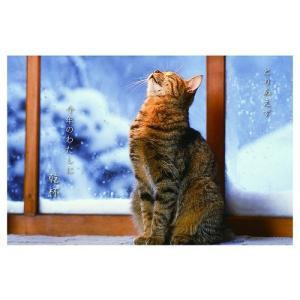 カレンダー2020年 低血圧なネコ 卓上 ポストカード仕様 ねこ APJ 150×190mm 動物 写真|cinemacollection|08