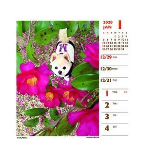 犬カレンダー 2020年 俊介 ポメラニアン 週めくりミニ いぬ 卓上 スケジュール 107×129mm 動物 写真 書き込み インテリア 2020 Calendar|cinemacollection|02