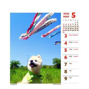 犬カレンダー 2020年 俊介 ポメラニアン 週めくりミニ いぬ 卓上 スケジュール 107×129mm 動物 写真 書き込み インテリア 2020 Calendar|cinemacollection|04