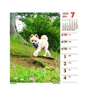 犬カレンダー 2020年 俊介 ポメラニアン 週めくりミニ いぬ 卓上 スケジュール 107×129mm 動物 写真 書き込み インテリア 2020 Calendar|cinemacollection|05