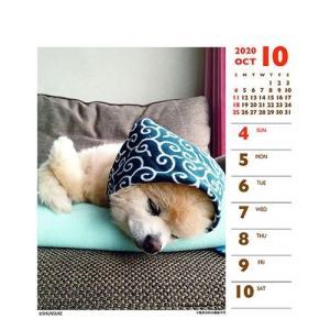 犬カレンダー 2020年 俊介 ポメラニアン 週めくりミニ いぬ 卓上 スケジュール 107×129mm 動物 写真 書き込み インテリア 2020 Calendar|cinemacollection|06