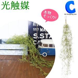 フェイクグリーン 観葉植物 壁掛け おしゃれ ハンギング 吊り下げ 人工観葉植物 光触媒 グリーンブッシュ モス 498741D|ciz
