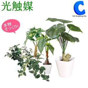 フェイクグリーン 光触媒 観葉植物 大型 おしゃれ インテリア おしゃれ シュガーバイン パキラ フィットニア ジャロファ アロカシア カメリアリーフ 6種類|ciz