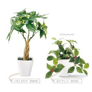 フェイクグリーン 観葉植物 光触媒 人工観葉植物 大型 おしゃれ シュガーバイン パキラ など 6種類 リアル ciz 04