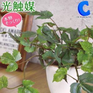 フェイクグリーン 光触媒 観葉植物 おしゃれ インテリア カメリアリーフ フィットニア グレープリーフ メイプルリーフ 4種類|ciz