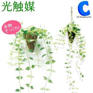 フェイクグリーン 観葉植物 光触媒 人工観葉植物 壁掛け ハンギング 吊り下げ ポトス|ciz