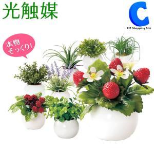 フェイクグリーン 観葉植物 光触媒 人工観葉植物 ユーカリ エアプランツ ラベンダー など 8種類 ラウンドポット|ciz