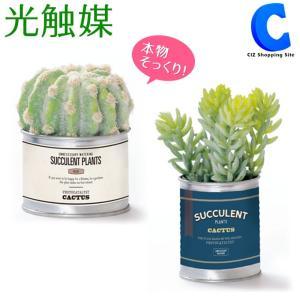 フェイクグリーン 観葉植物 光触媒 人工観葉植物 おしゃれ 多肉植物 サボテン ボール セダム TINサキュレント|ciz