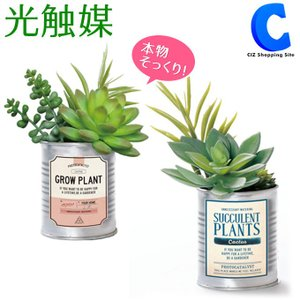 フェイクグリーン サボテン 観葉植物 光触媒 人工観葉植物 多肉植物 寄せ植え TINサキュレント ミックス|ciz