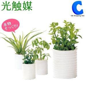 フェイクグリーン 観葉植物 光触媒 人工観葉植物 ハートリーフ ミント カポック エアープランツ TRシリーズ|ciz