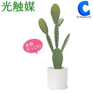 フェイクグリーン 観葉植物 光触媒 人工観葉植物 多肉植物 サボテン ウチワサボテン TRL 498819D|ciz