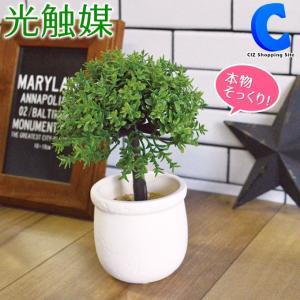 フェイクグリーン 観葉植物 光触媒 人工観葉植物 バジル パキラ ラベンダー ミニアイビー など 7種類|ciz
