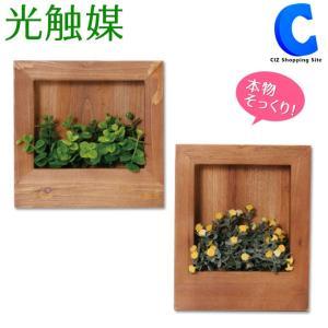 フェイクグリーン 観葉植物 光触媒 人工観葉植物 壁掛け ウッドウォールパネル グリーンウッドフレーム 正方形 長方形|ciz