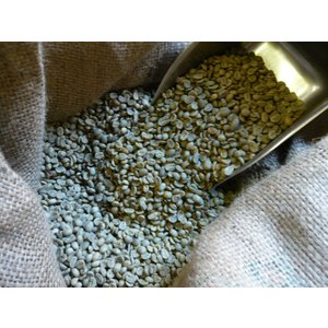 アラビカコーヒー生豆 グァテマラ SHB Guatemala SHB 200g  クラシカルコーヒーロースター|classicalcoffee